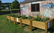 Verdure et convivialité au Quartier de Basse Enhaive